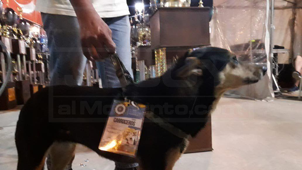 Flaca, la perrita carrocera que conmovió en la entrega de premios