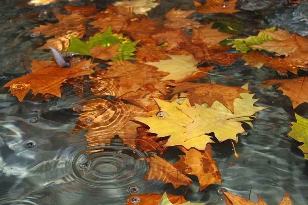 Caminando un otoño lluvioso