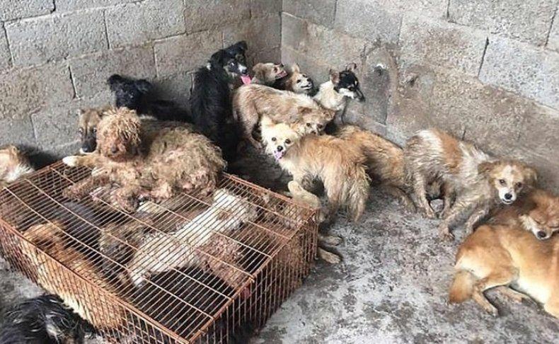 Rescatan a 62 perros que iban a ser cocinados en un festival de China