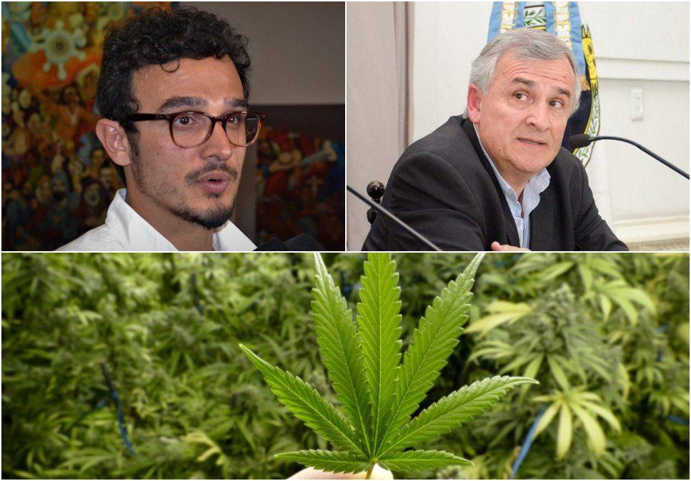 Histórico: llegan a Jujuy semillas de cannabis