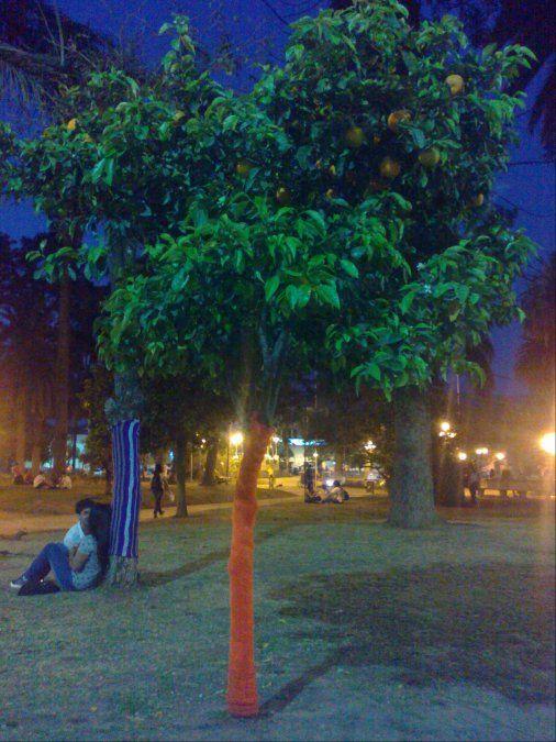 Los Barrios, séptima parte: Los Naranjos