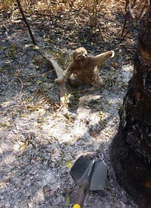 Un oso perezoso fue auxiliado por brigadistas jujeños