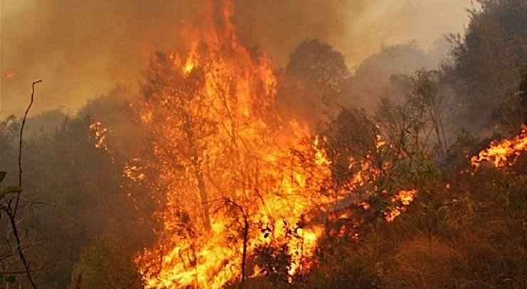 Aseguran que hay más de dos millones de hectáreas afectadas por los incendios