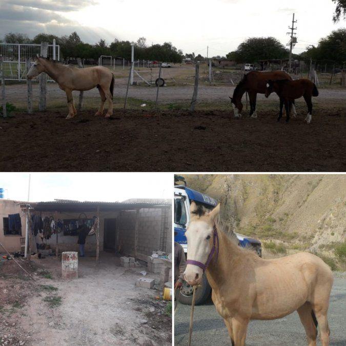 Se robó cuatro caballos y quedó detenido