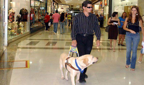 Promulgaron ley sobre  acompañamiento de perros guía para ciegos
