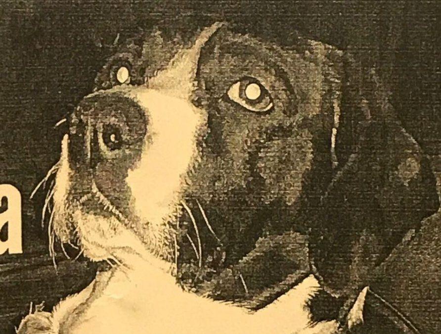 Canino perdido en Almirante Brown
