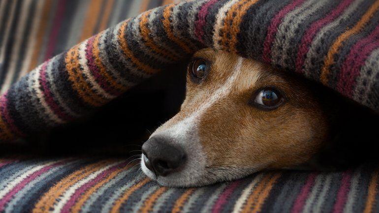 Cómo cuidar a tu mascota en época de frío