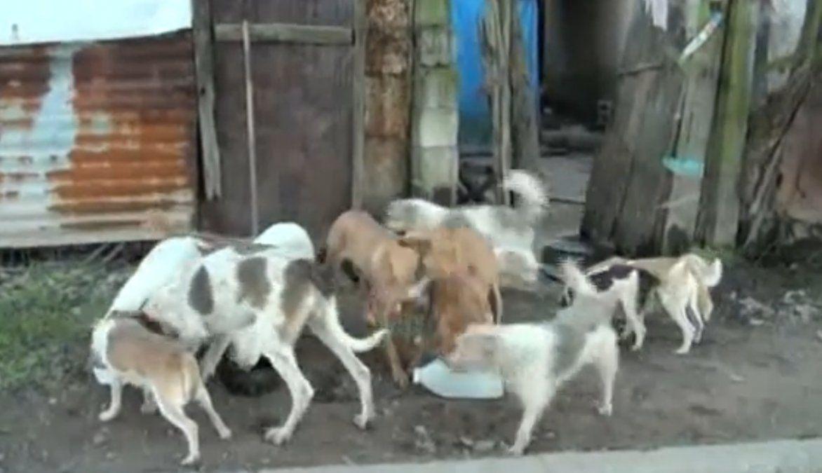 Su dueño falleció y los vecinos buscan quien los adopte