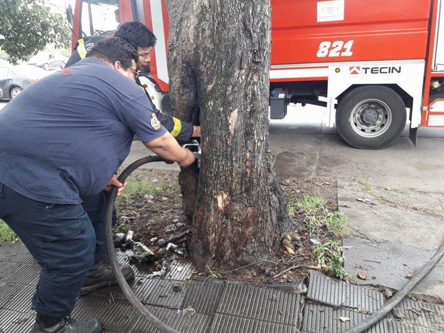 Apagan un árbol que se prendió fuego por quema de basura