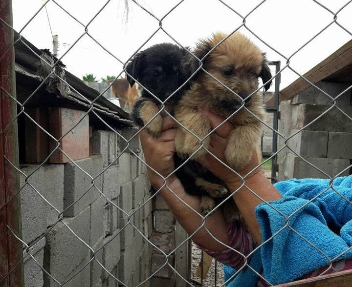 """El hogar """"San Roque"""" necesita nuestra ayuda"""