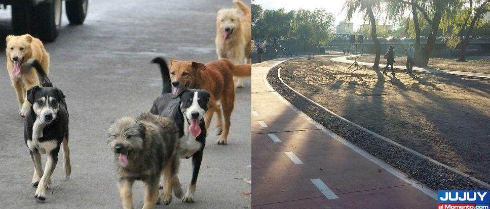"""Se realizará el gran """"perrotón"""" en el Parque Xibi Xibi"""