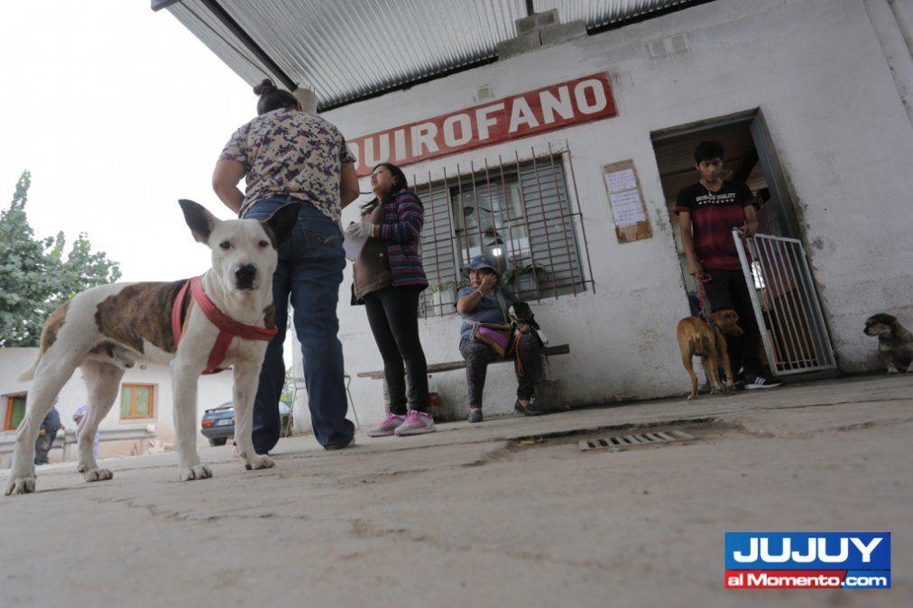 Vacunación antirrábica en diferentes barrios de Capital
