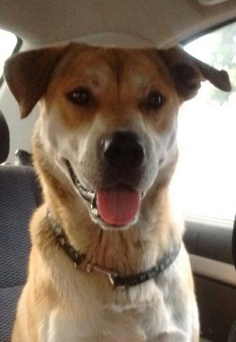 Rubio, el perro callejero