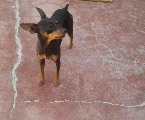 Perrito perdido en barrio Los Ceibos