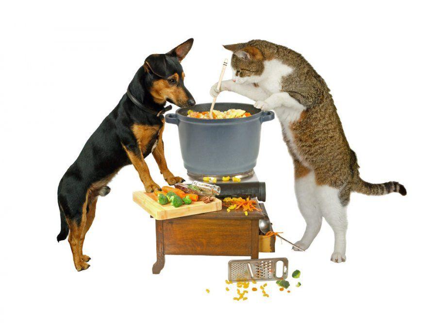 Alimentación casera vs. alimento balanceado