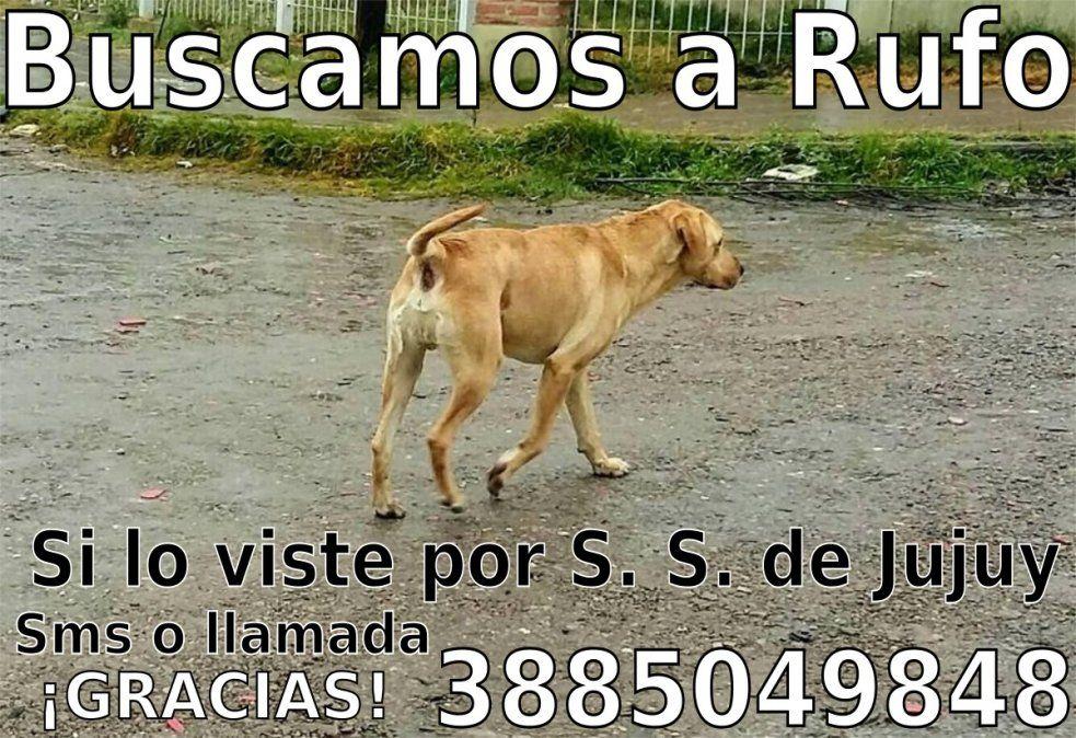 Ayudanos a encontrar a Rufo