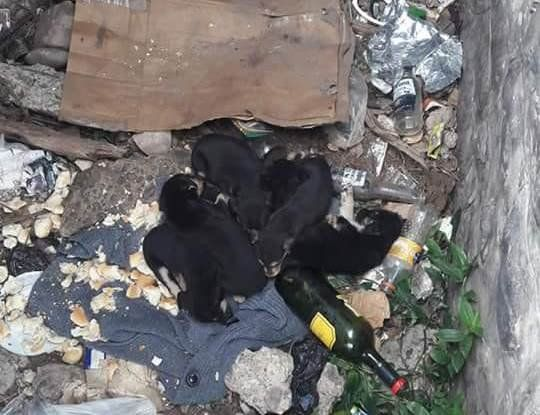Desidia: abandonaron cachorros en un pozo
