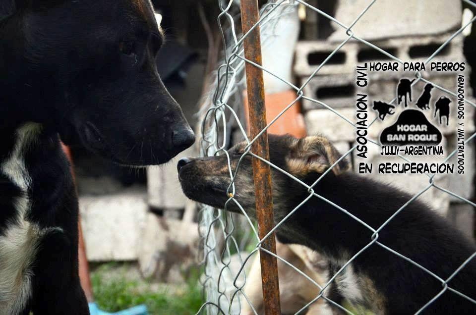 Una casa para 400 perros en Jujuy