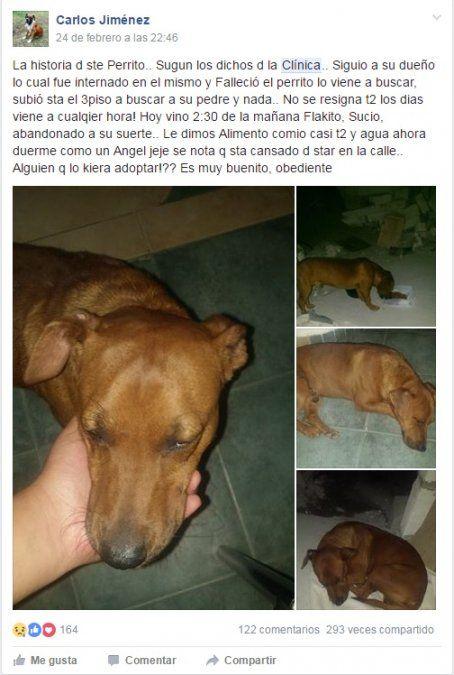 Un perro esperó a su dueño en la puerta del hospital, pero este falleció