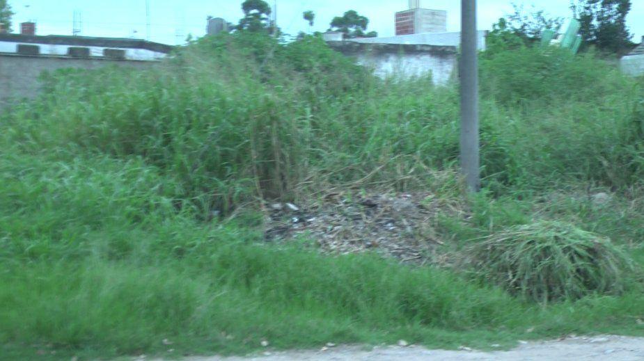 Vecinos molestos por ratas y víboras en Sargento Cabral