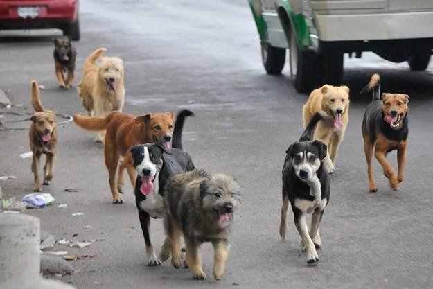 4 de abril: Día Internacional de los Animales Callejeros