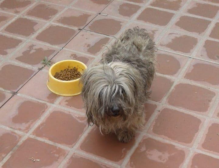 Encontraron a este perrito y buscan a sus dueños