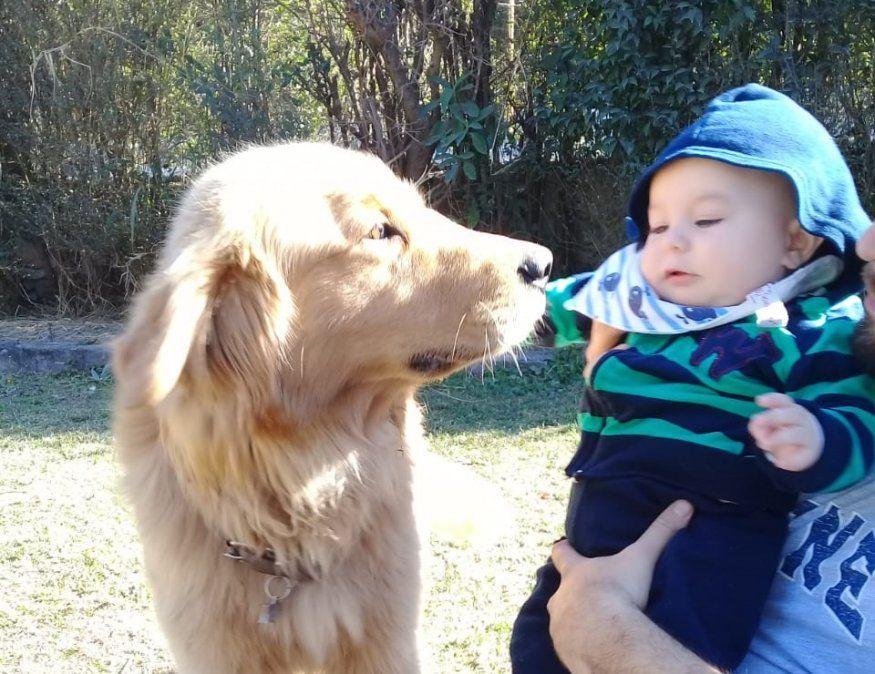 Buscan a Ciro, un perro extraviado en Yala