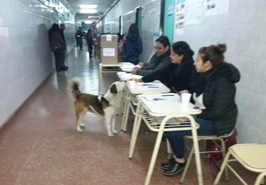 El divertido perrito que fue a votar a una escuela de Palpalá