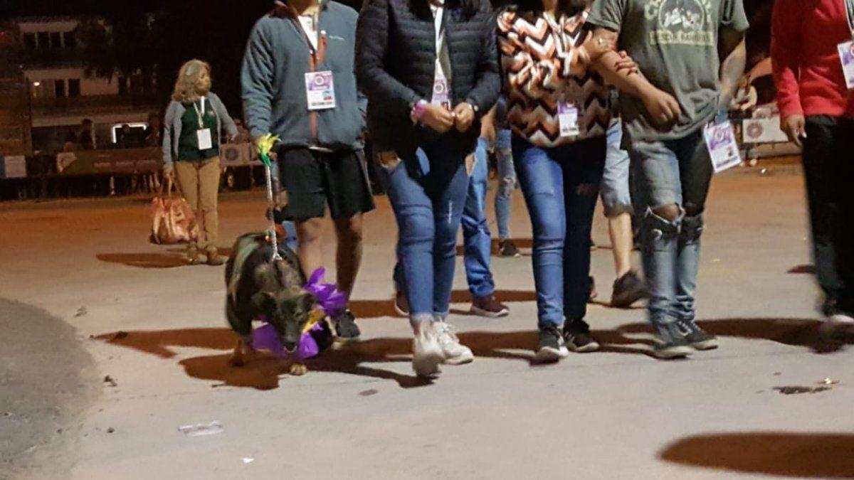 Cacho, el perro carrocero que acompaña a la Agrotécnica El Brete