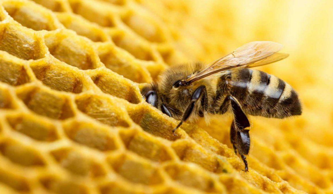 Declararon a las abejas como el ser vivo más importante del planeta