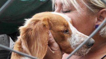 Tercer festival de rock a beneficio de perros abandonados