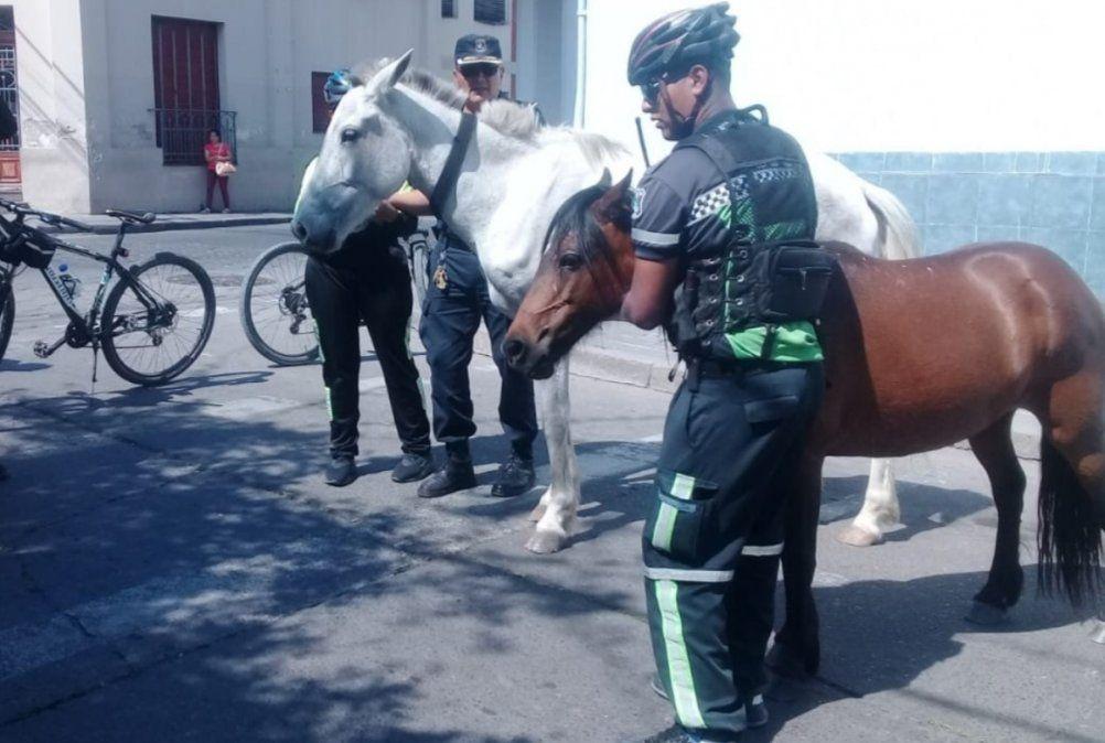 Dos caballos sueltos en pleno centro