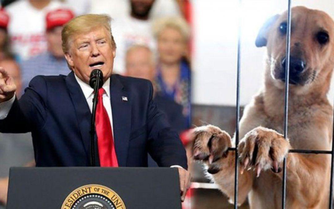 Donald Trump convierte el maltrato animal en delito federal
