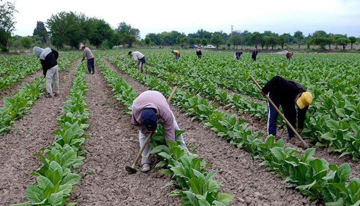 Tabaco en crisis: qué hacen hoy los productores que dejaron el cultivo