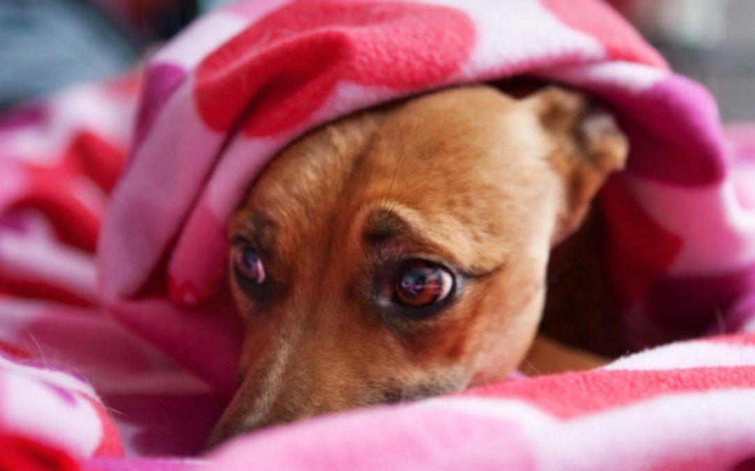 Programa especial de TV para que los perros no sufran la pirotecnia en las fiestas