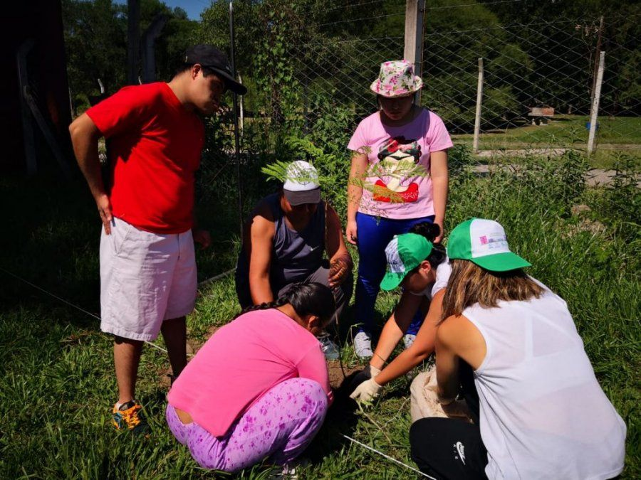 Compromiso Ambiental: plantan 350 árboles nativos  en Jujuy