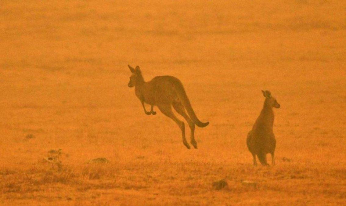Impresionantes postales e historias de los incendios forestales en Australia