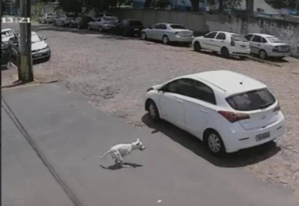 Abandonó un perrito discapacitado en la calle y todo quedó registrado por las cámaras