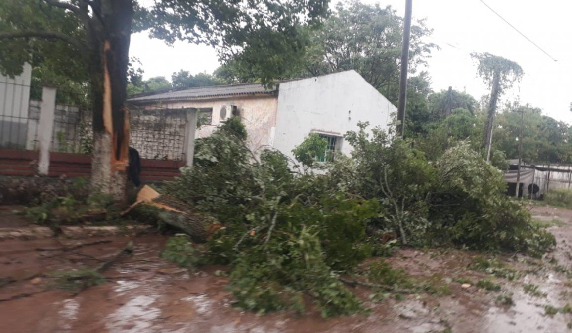 Fuerte temporal en Caimancito provocó caída de árboles y postes de luz