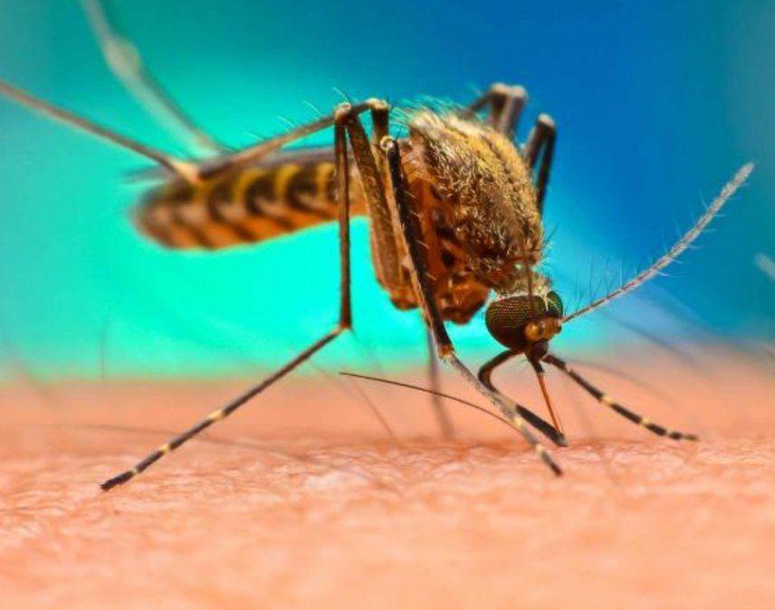 Primer caso de dengue en Jujuy en lo que va de 2020