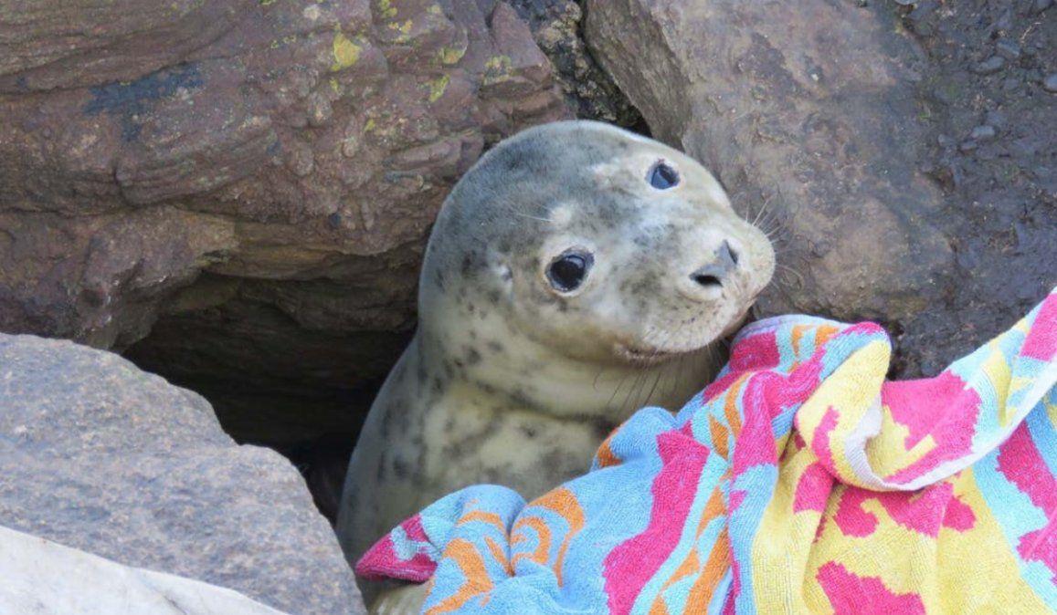 Rescatan a un foca atrapada entre las rocas