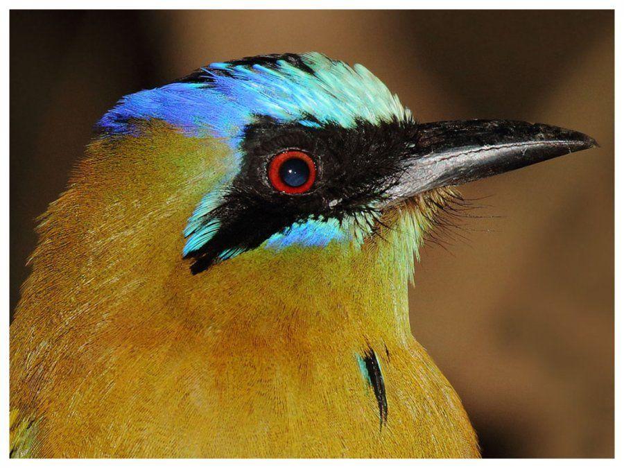 10 de enero: día mundial de las aves