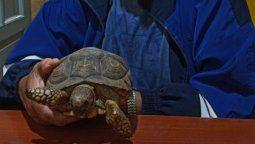 escapaba con 4 tortugas en su mochila