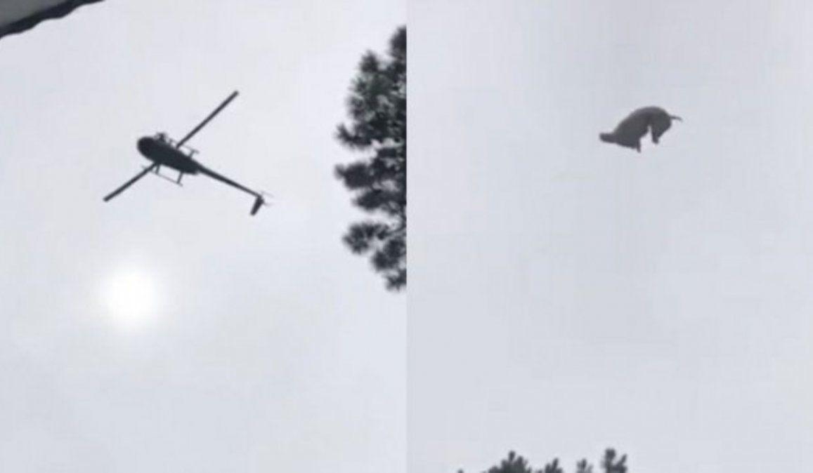Tiraron un cordero muerto desde un helicóptero a la pileta de un empresario