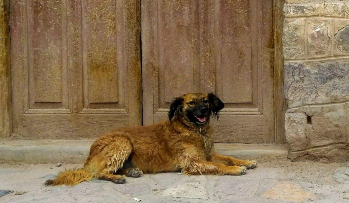 Buscan intensamente a Garrita, una popular perrita de Maimará
