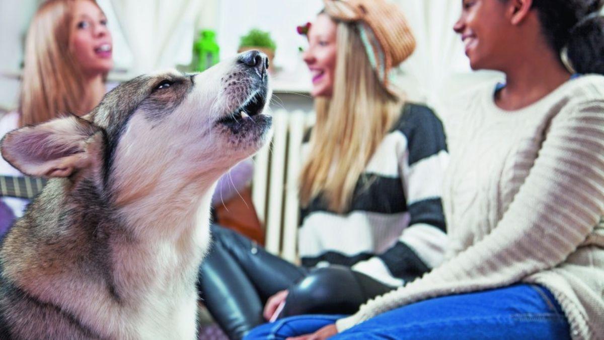 Tu perro tenía razón en ladrarle a tu ex: un estudio demuestra que reconocen quién es malo