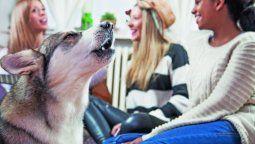 tu perro tenia razon en ladrarle a tu ex: un estudio demuestra que reconocen quien es malo