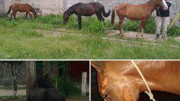la policia recupero dos caballos robados