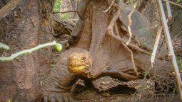 diego, la tortuga que tuvo 800 crias se jubila