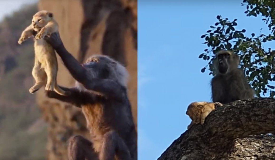 Un mono y un cachorro recrearon la épica escena del Rey León y estallaron las redes